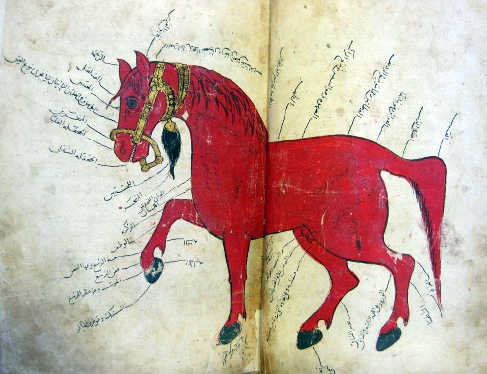 The art of the islamic book from the leiden collections khatt foundation